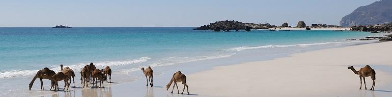 Travel Deals in Oman